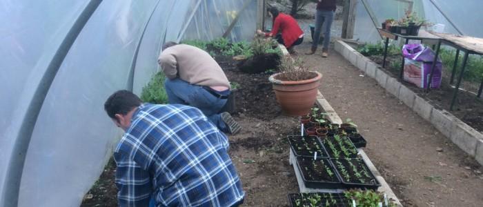 horticulture_gardens_12